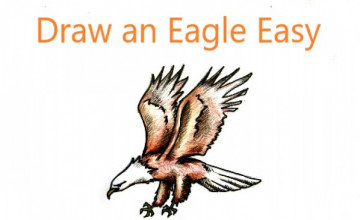How To Draw an Eagle Easy Piecemeal Employing A Pencil